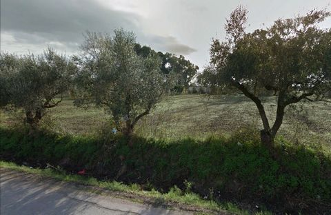 Superb Land Plot For Sale in Zakynthos Greece Euroresales Property ID- 9825626 Property Information: The Agria Estate is a 6,2 acres (25.300 sqm) of green, sun-filled habitable land, with a small house of 70sqm (two bedrooms) in the middle. The estat...